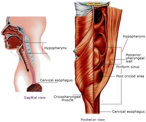Center For Larynx Trachea And Hypopharynx Reconstruction